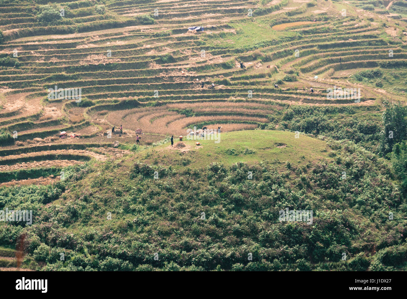Farmers working in the rice terraces of Sa Pa (Sapa) in northern Vietnam, southeast Asia - Stock Image