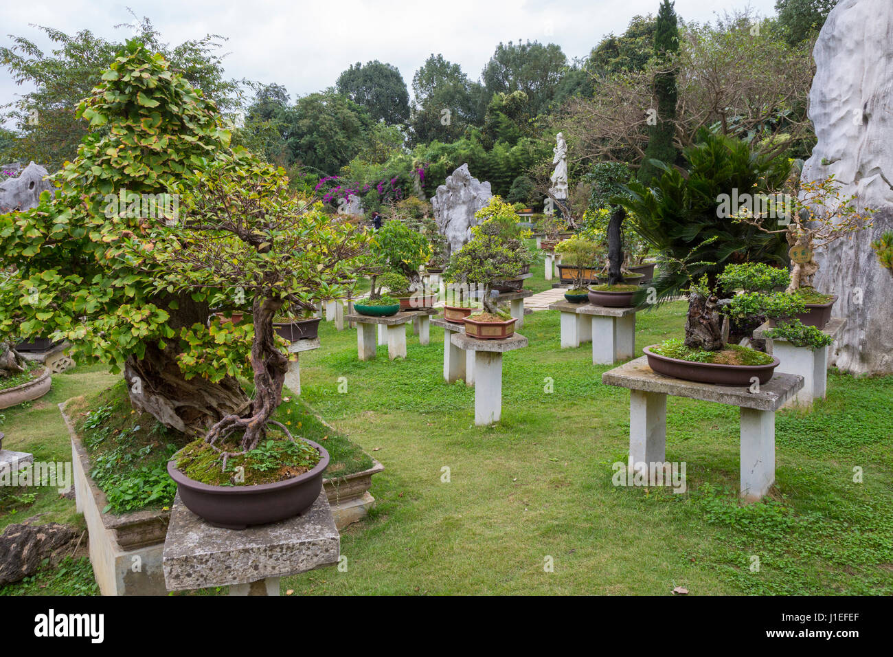 Guizhou Province China Bonsai Garden Yellow Fruit Tree Stock Photo Alamy