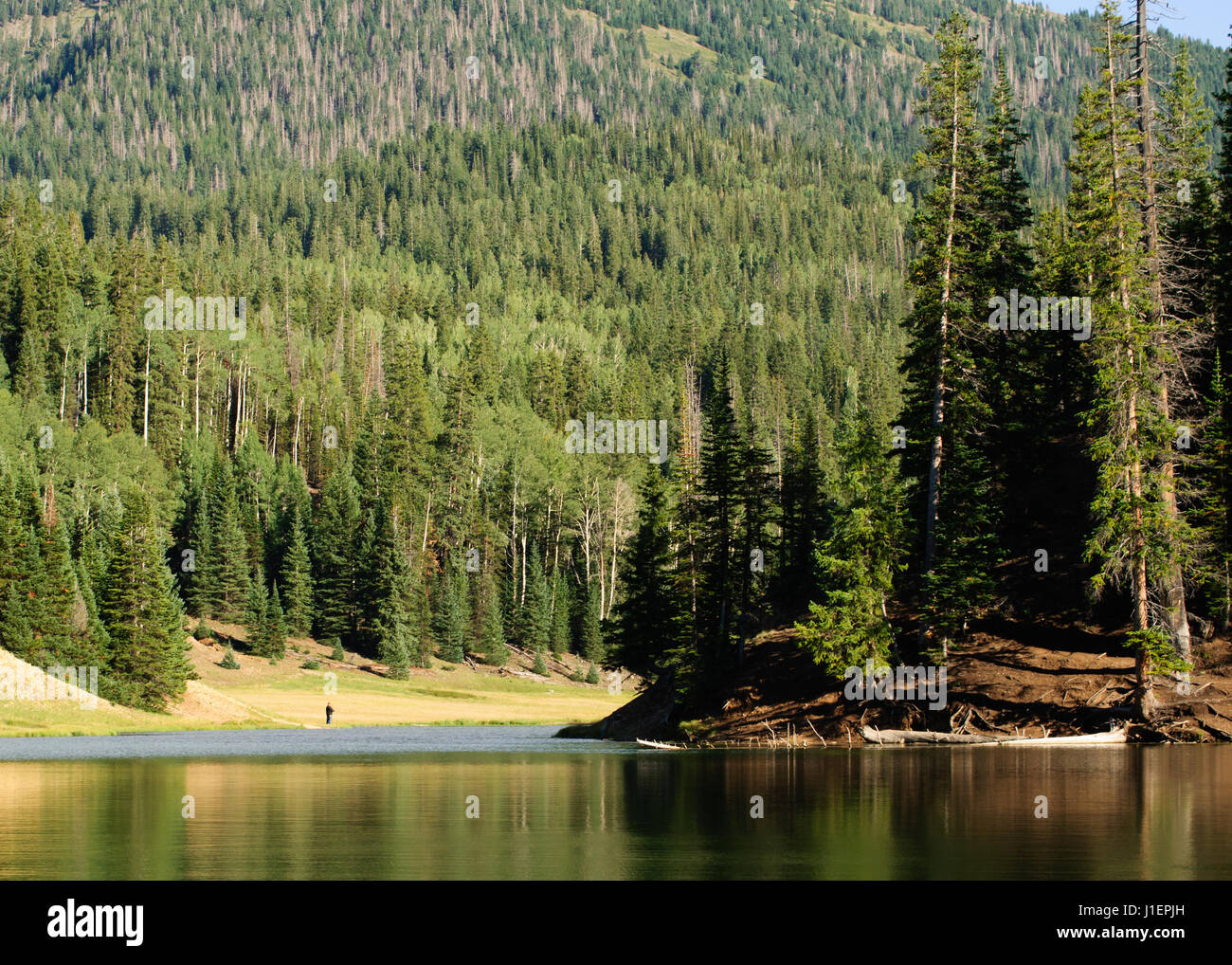 Man fishing at Anderson Meadow reservoir in Utah surrounded by thick forest. - Stock Image