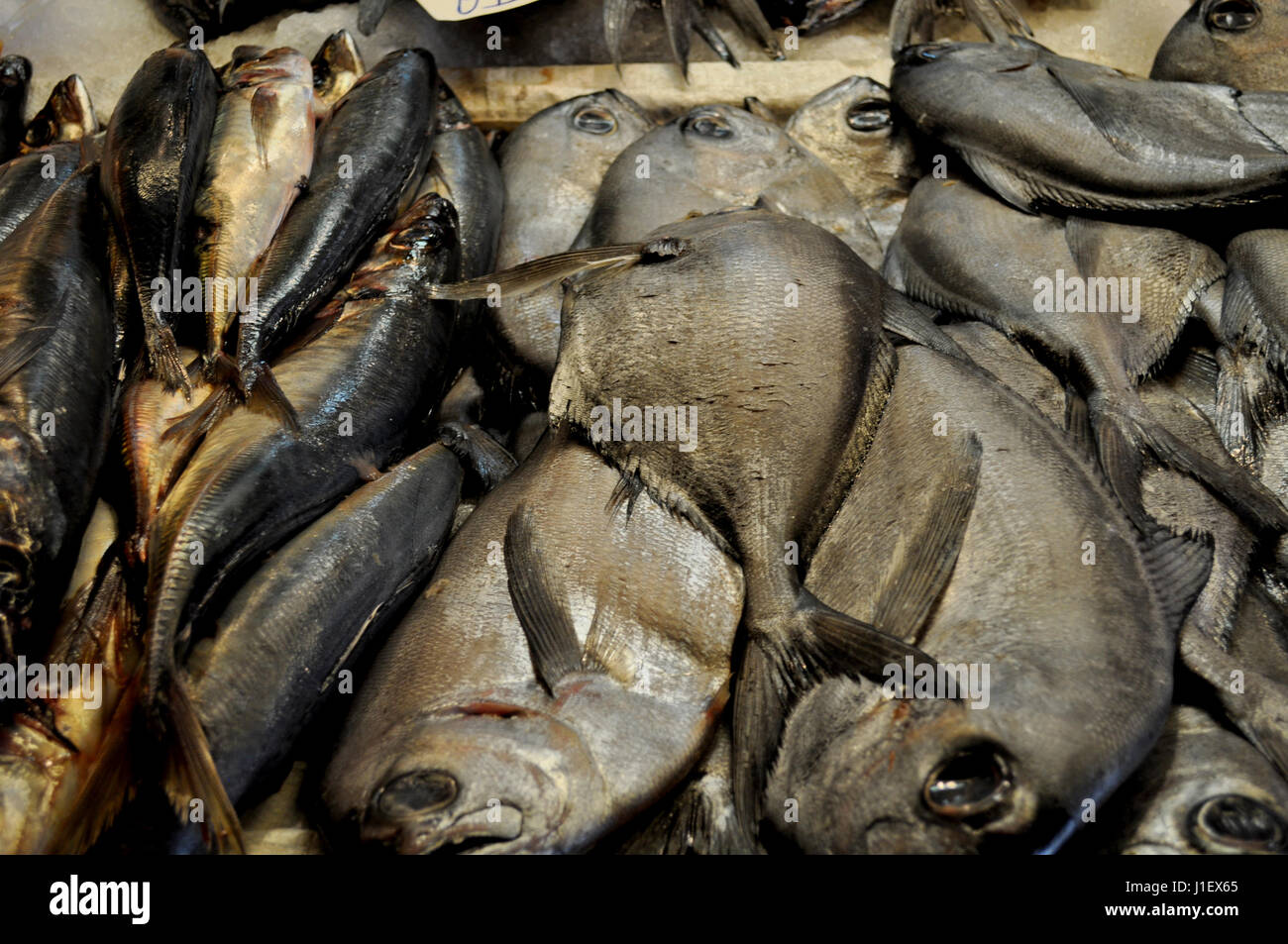 Reineta Fish at Fish Market - Stock Image