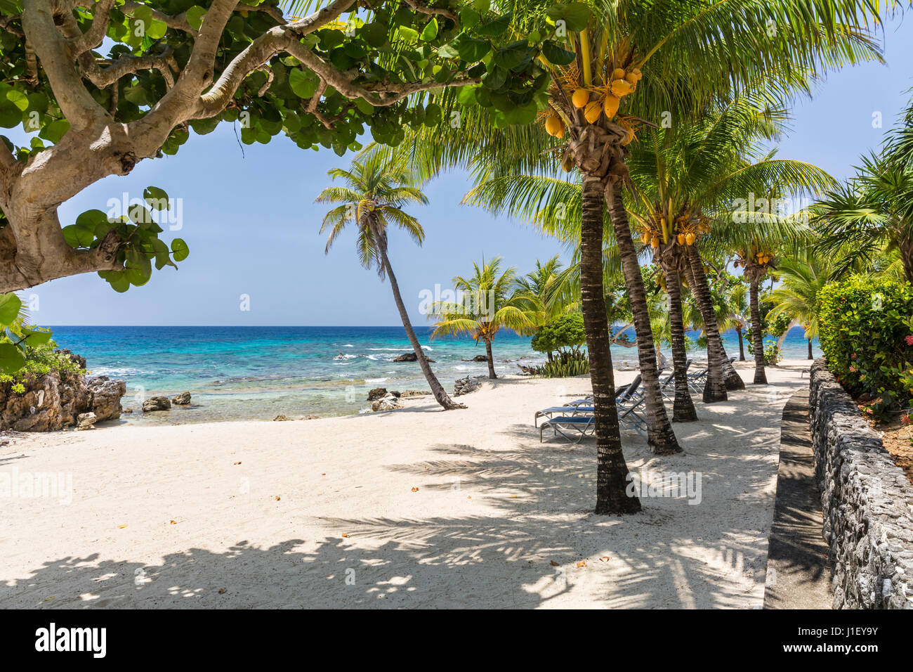Palm trees and a stone wall line the beautiful sandy beach at Lighthouse Point near the Meridian Resort in Roatan, - Stock Image