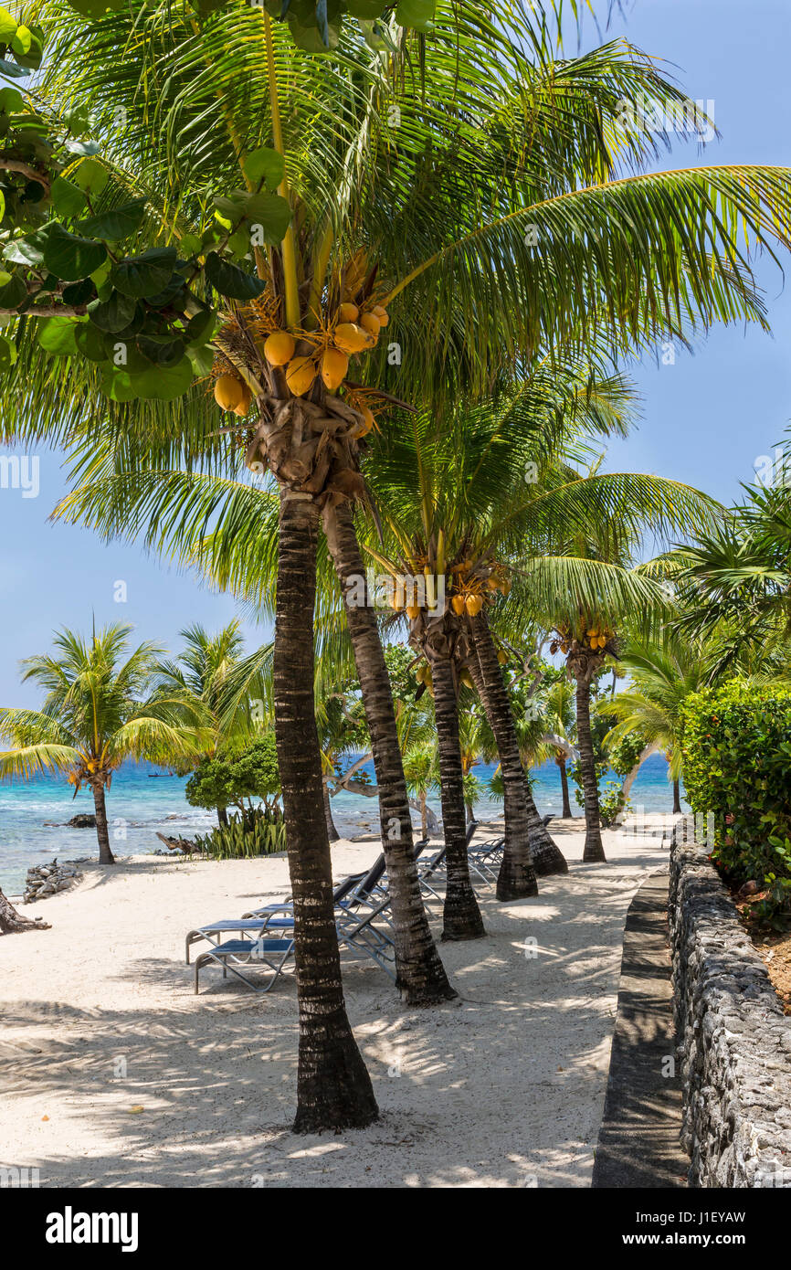 Coconut palm trees and a stone wall line the beautiful sandy beach at Lighthouse Point near the Meridian Resort - Stock Image