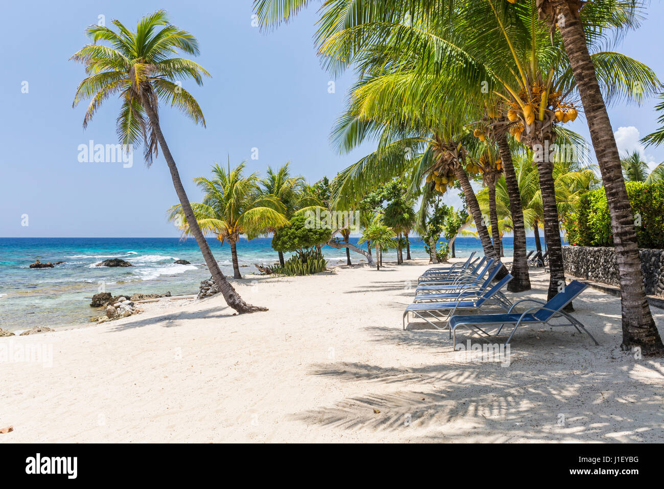 Coconut palm trees and beach chairs line the beautiful sandy beach at Lighthouse Point near the Meridian Resort Stock Photo