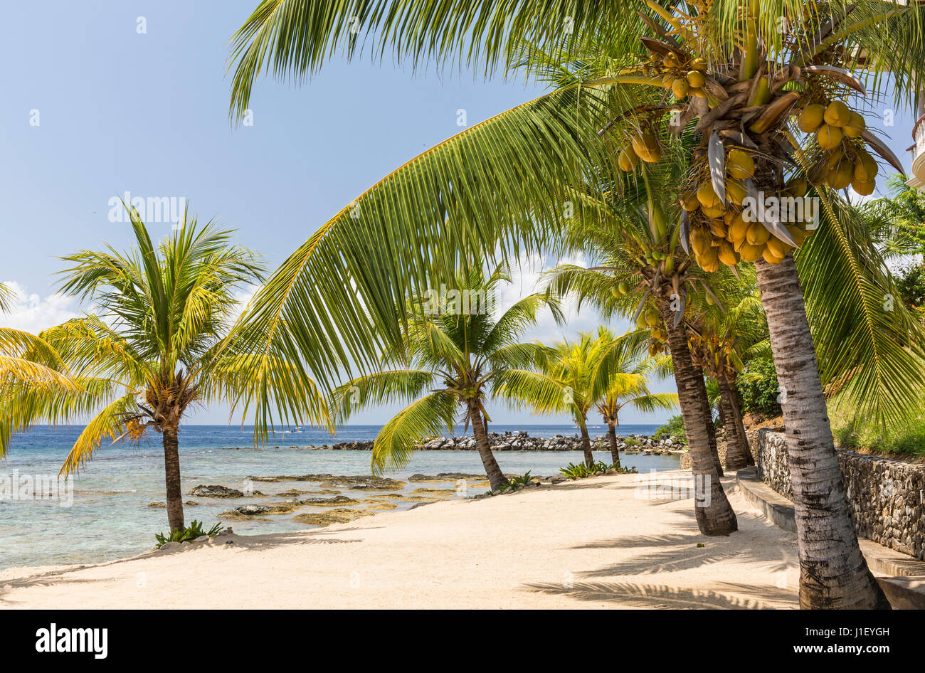 Coconut palm trees line the beautiful sandy beach and coral reef at Lighthouse Point near the Meridian Resort in Stock Photo