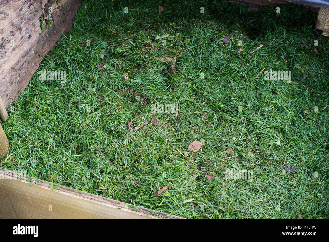 Grass clippings on a compost heap. UK - Stock Image