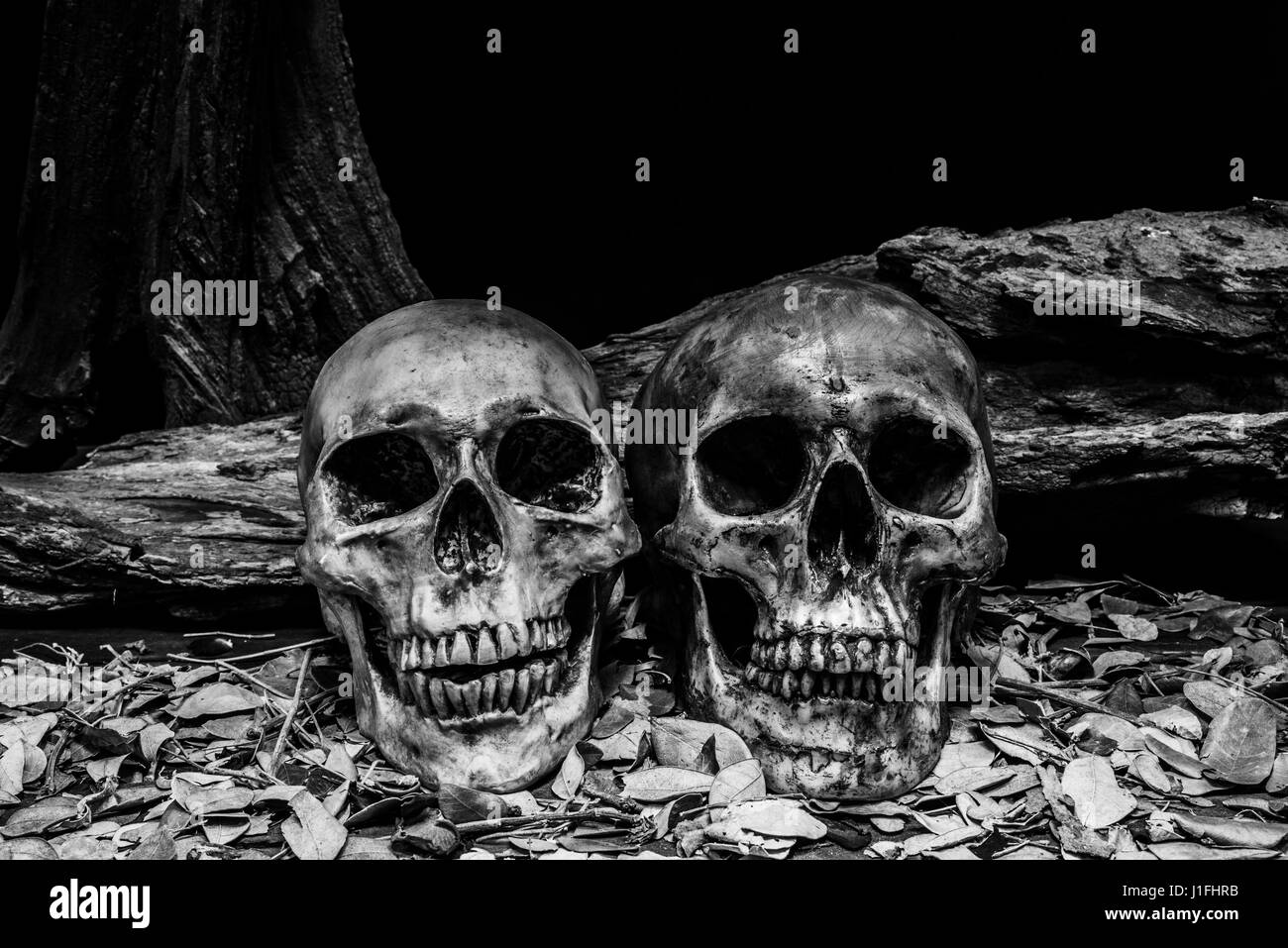 still life photography with human skull and timber background, darkness horror halloween concept - Stock Image