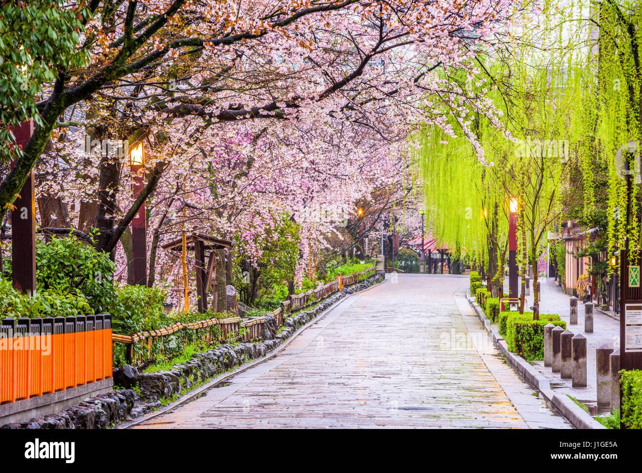 Gion Shirakawa, Kyoto, Japan in spring. Stock Photo
