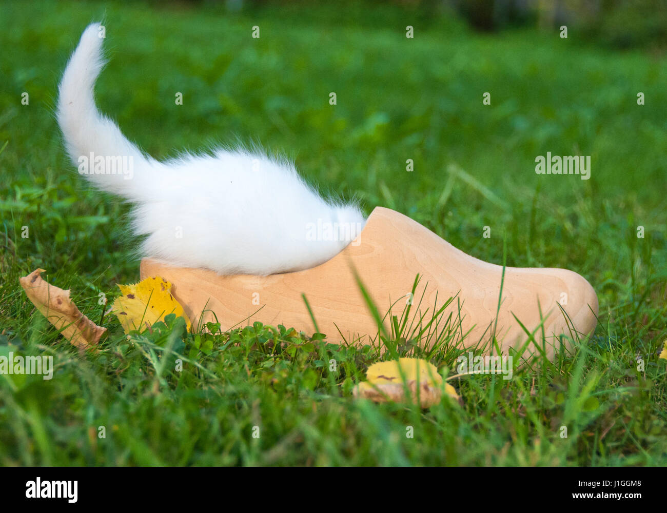 White little cat in a wooden shoe Stock Photo