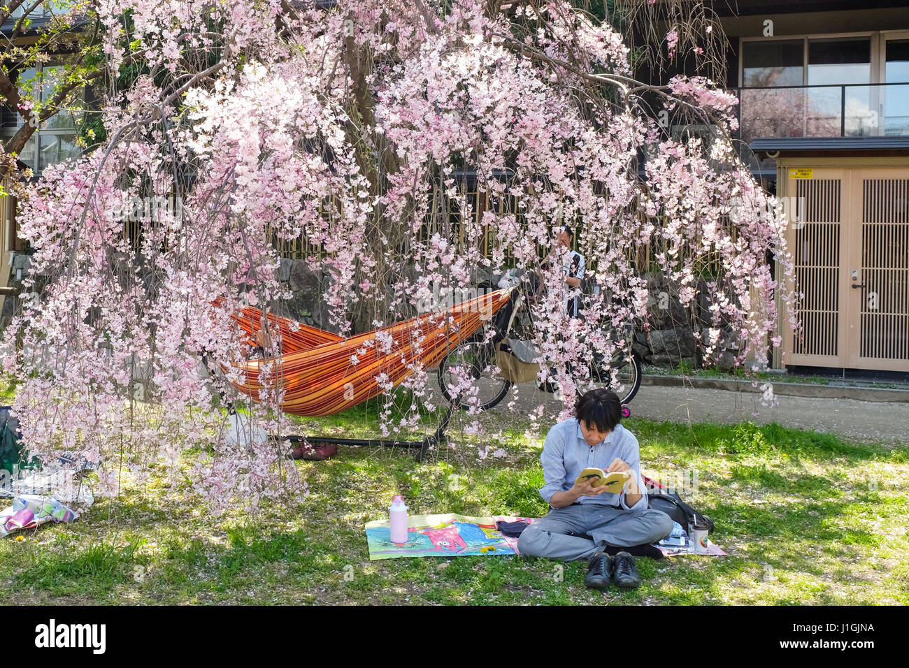 A man relaxes under a cherry blossom tree in Kyoto, Japan, during the 'sakura' season in 2017. - Stock Image