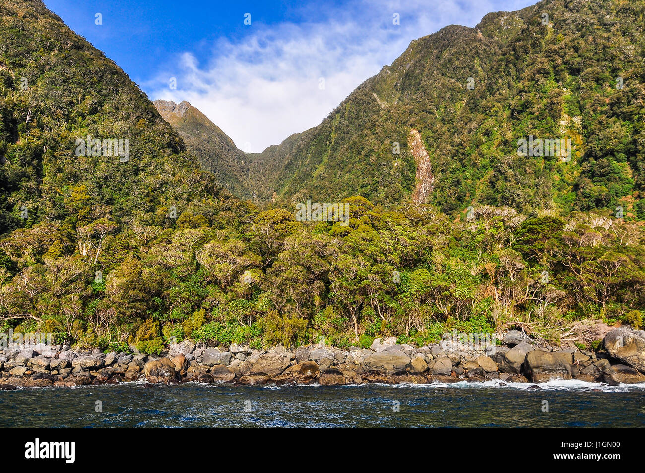 Lush forest in the Milford Sound, one of the most beautiful fiords in New Zealand - Stock Image