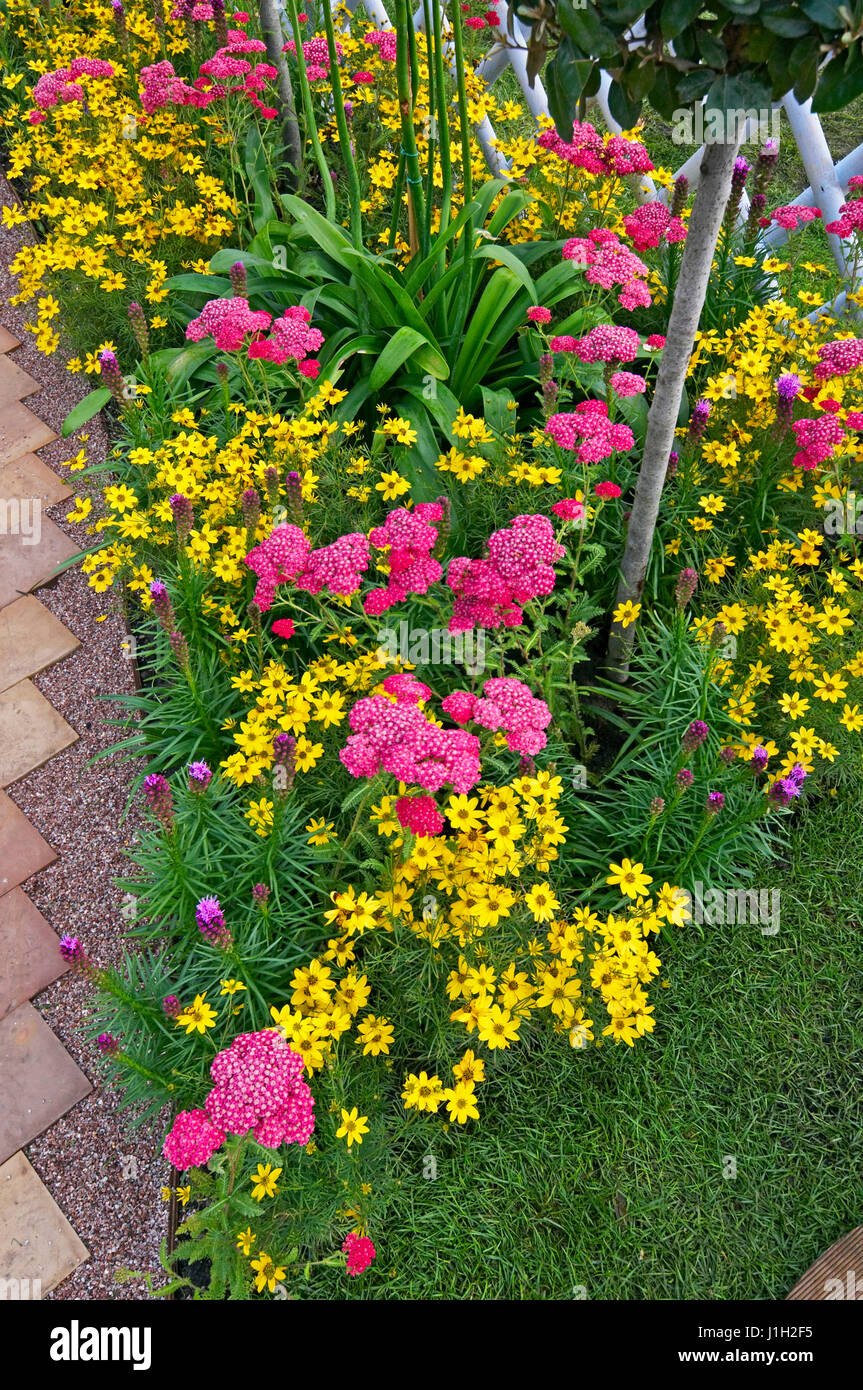 Detail of Achillea millefolium and Coreopsis in a colourful border - Stock Image