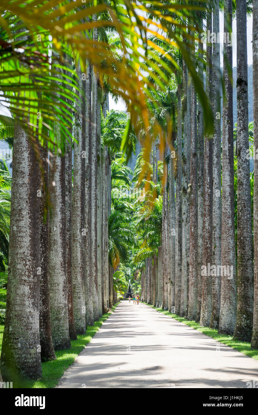 Avenue of tall royal palm trees with an infinite view in Rio de Janeiro, Brazil botanic garden - Stock Image