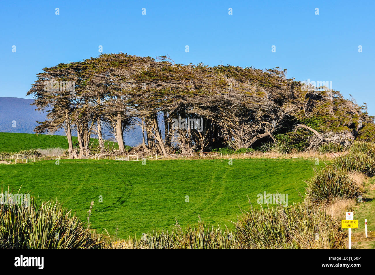 Twisted trees in the Southern Scenic Route, New Zealand - Stock Image