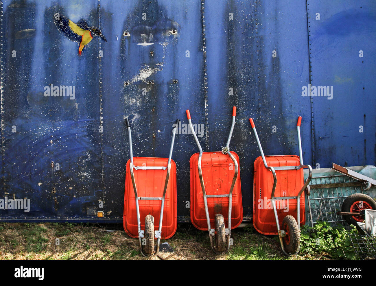 3 parked wheelbarrows and one kingfisher in an allotment - Stock Image