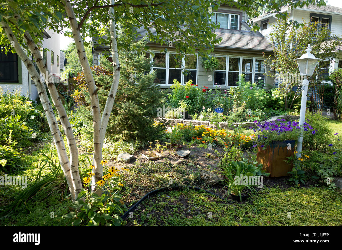 Home front garden with flowers framed with birch trees. St Paul Minnesota MN USA - Stock Image
