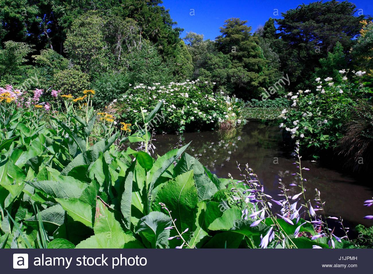 etang de jardin, végétation aquatique, feuillage, aquatique, bassin