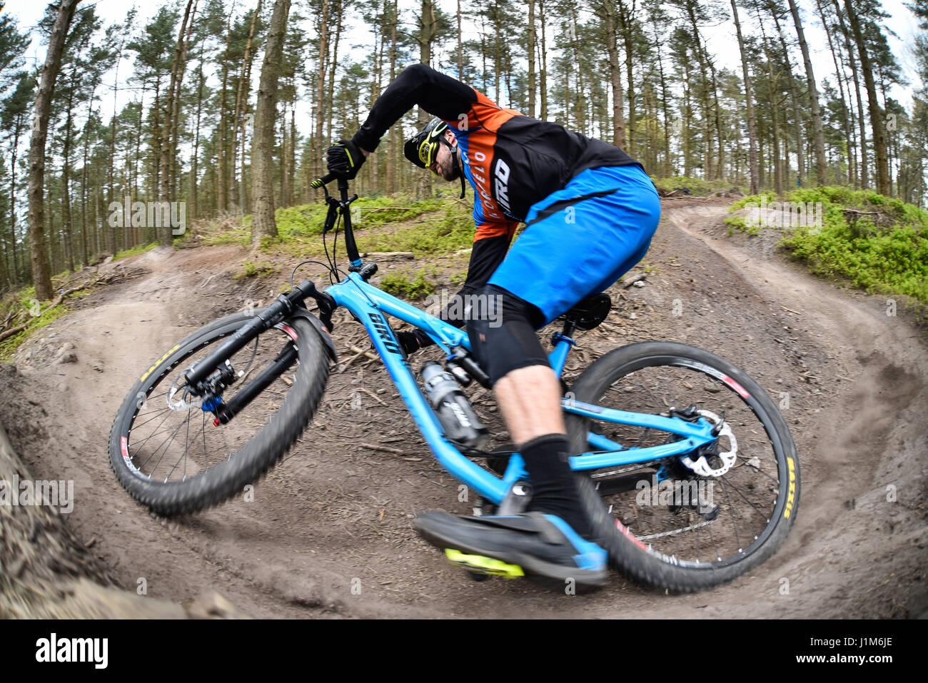Mountain biking in Surrey hills - action shot - Stock Image
