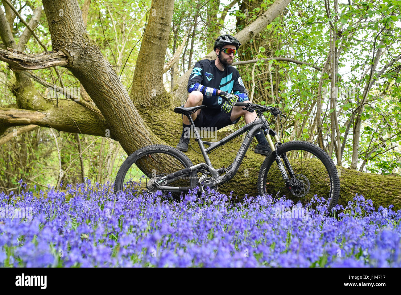 Mountain biker in blue bell countryside - Stock Image