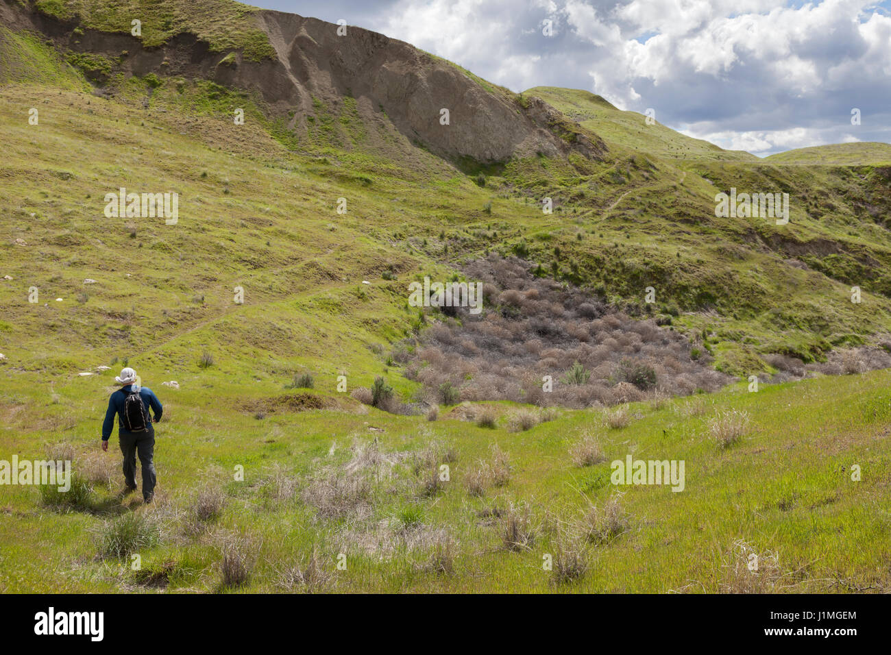 Franklin County, Washington: Man hiking the White Bluffs along the Columbia River in Hanford Reach National Monument. - Stock Image