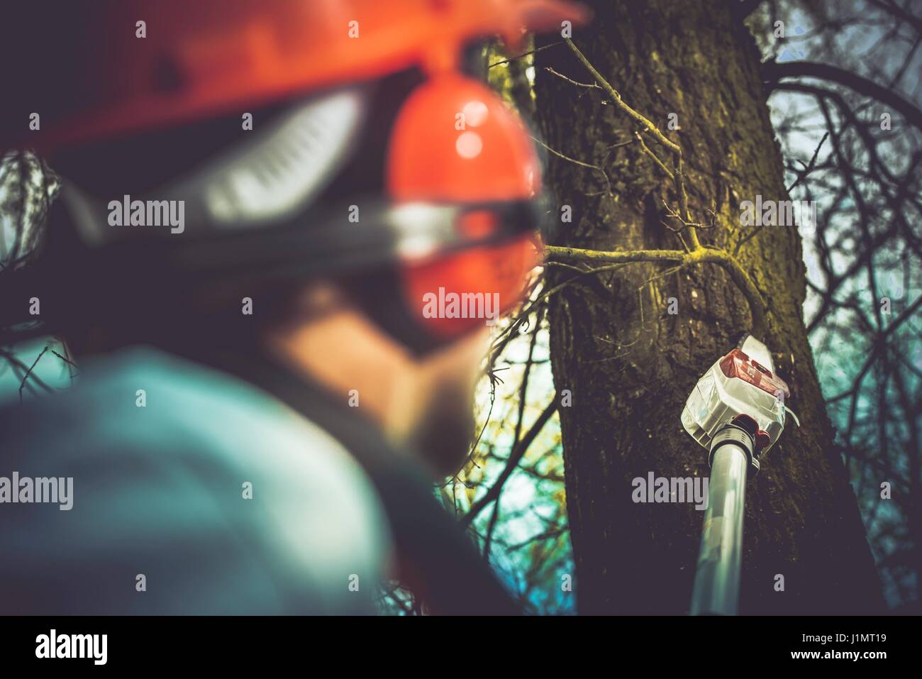 Taking Care of Trees by Removing Damaged and Dead Tree Branches Using Electric Wood Cutter on Extended Pole. Professional - Stock Image