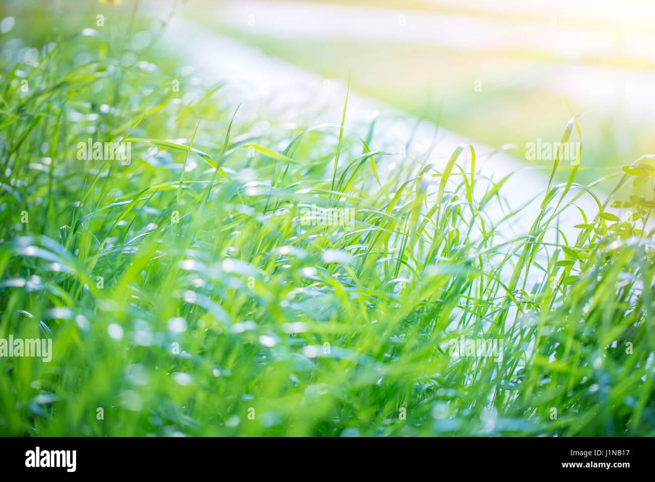 Fresh Green Grass Field Nice Warm Sunny Day Good Weather