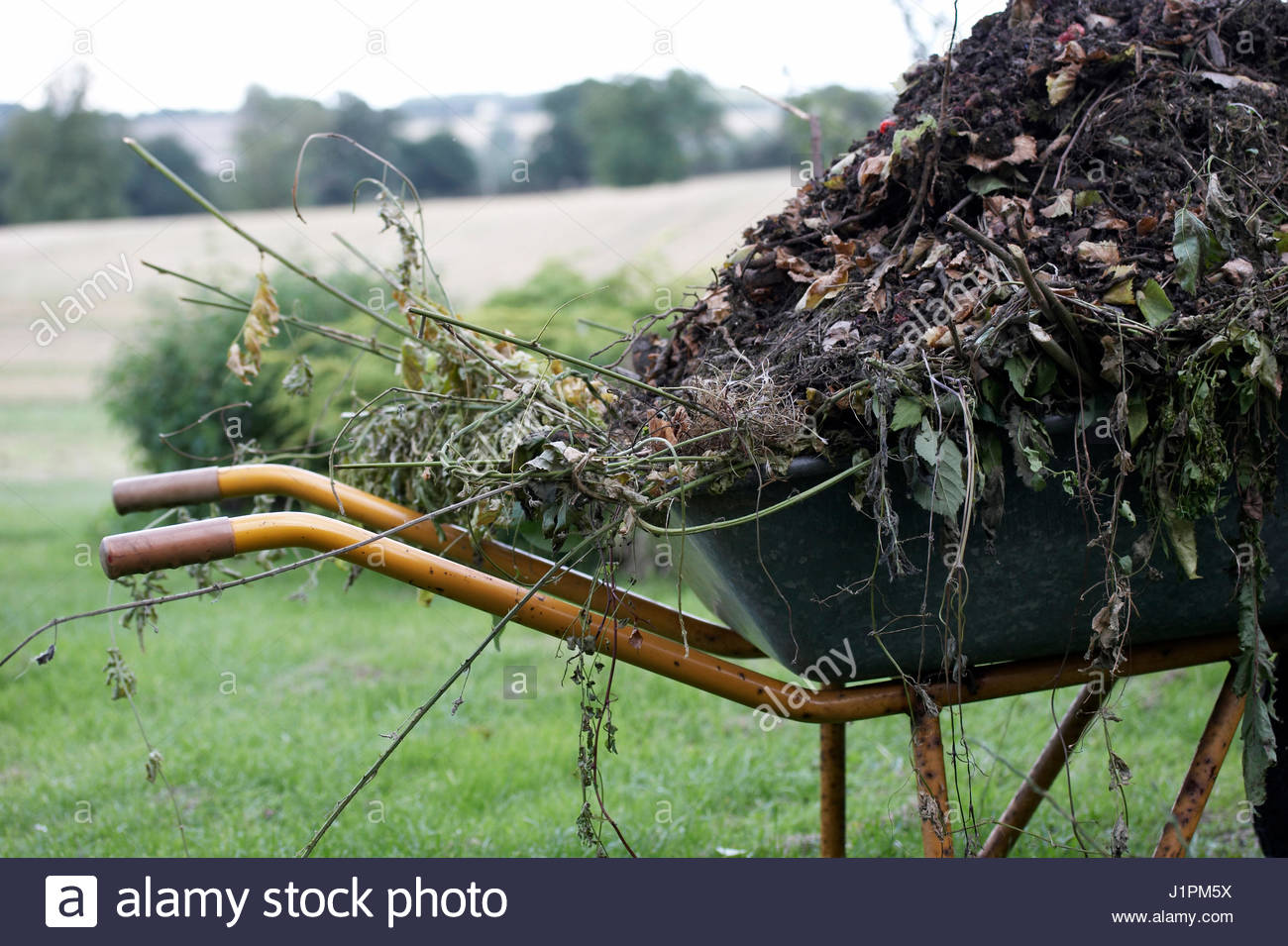 WHEELBARROW FULL OF GARDEN CLIPPINGS. - Stock Image