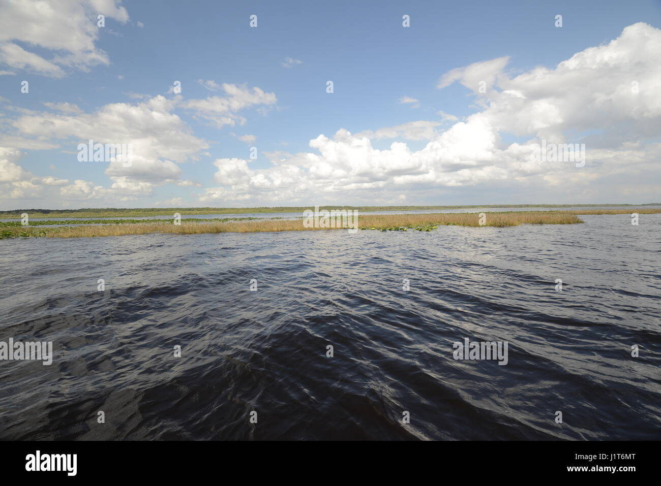 swamp water mid state of Florida USA - Stock Image