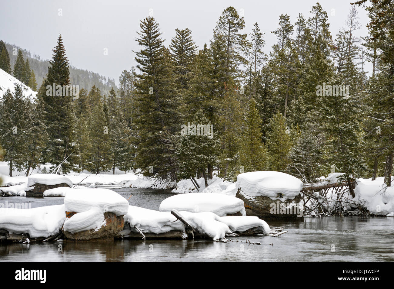 Firehole river in winter, surrounded by snow covered wilderness of Yellowstone National Park, Wyoming, USA. - Stock Image
