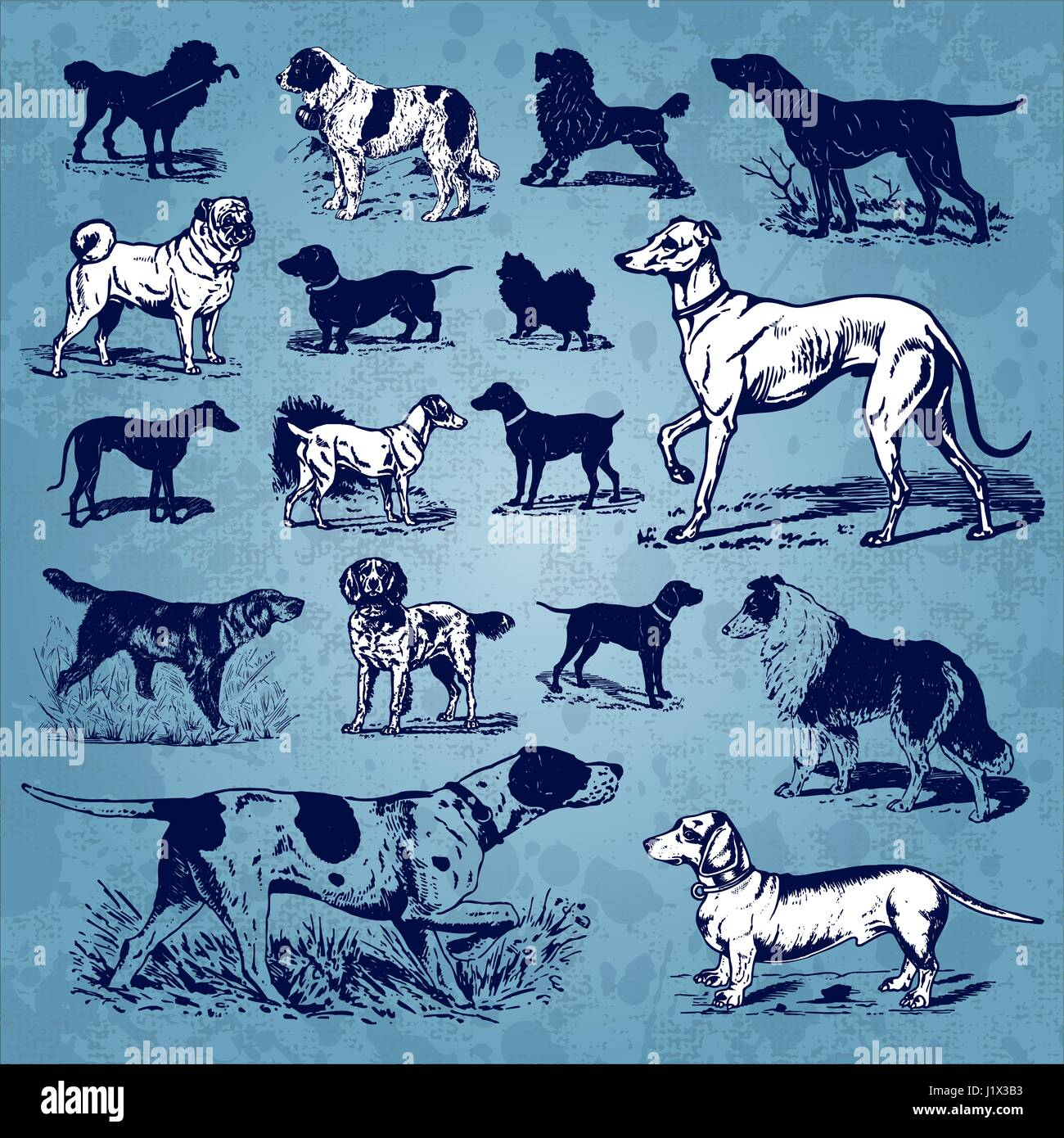 Set of antique dogs illustrations (vector) - Stock Image