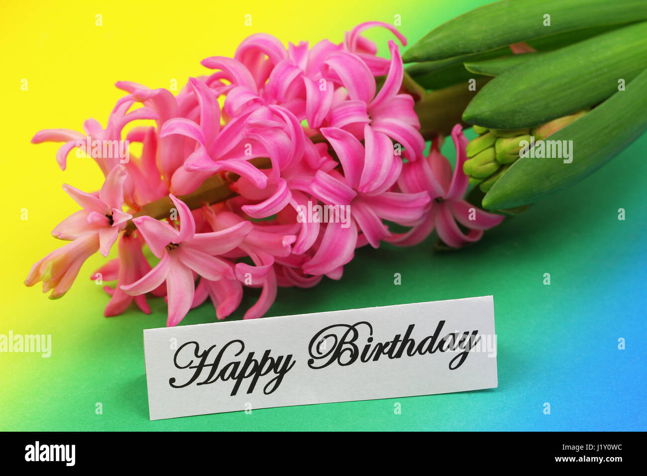 Happy Birthday Card With Pink Hyacinth Flower On Colorful Background
