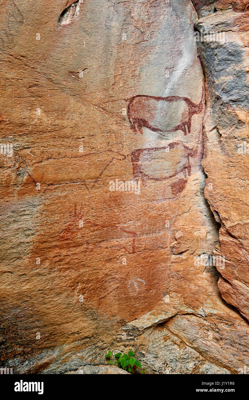 Rhinos and a cow-like figure, Rock art, ancient San paintings, Tsodilo Hills, UNESCO world heritage site, Botswana, - Stock Image