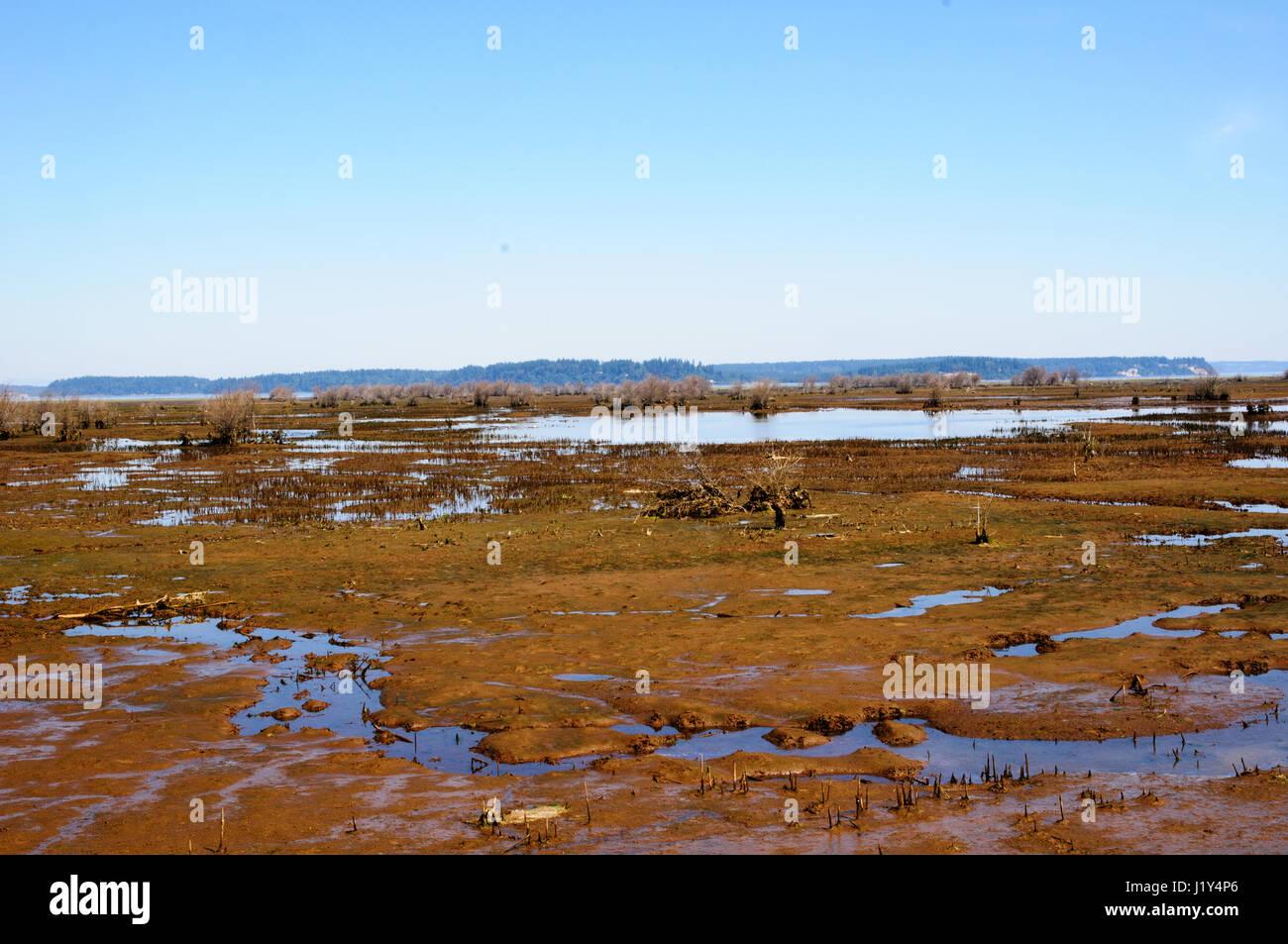 Mudflats, Nisqually National Wildlife refuge, Washington, USA - Stock Image
