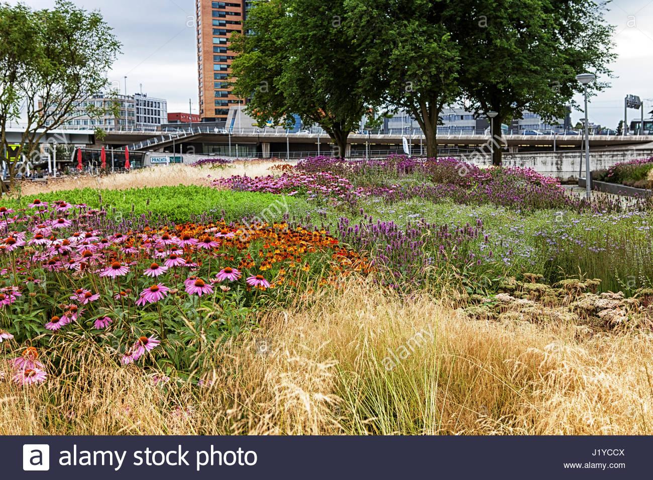 Rotterdam city garden design by piet oudolf stock photo for Piet oudolf pflanzplan