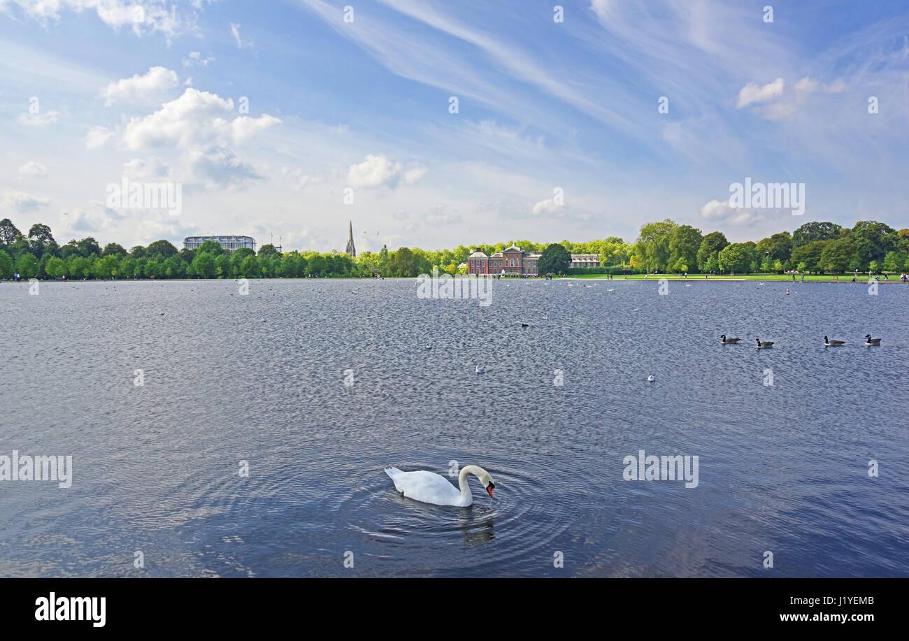 Swan (cygnus anatidae) and Geese (Branta canadensis) on Round Pond in Kensington Gardens with Kensington Palace - Stock Image