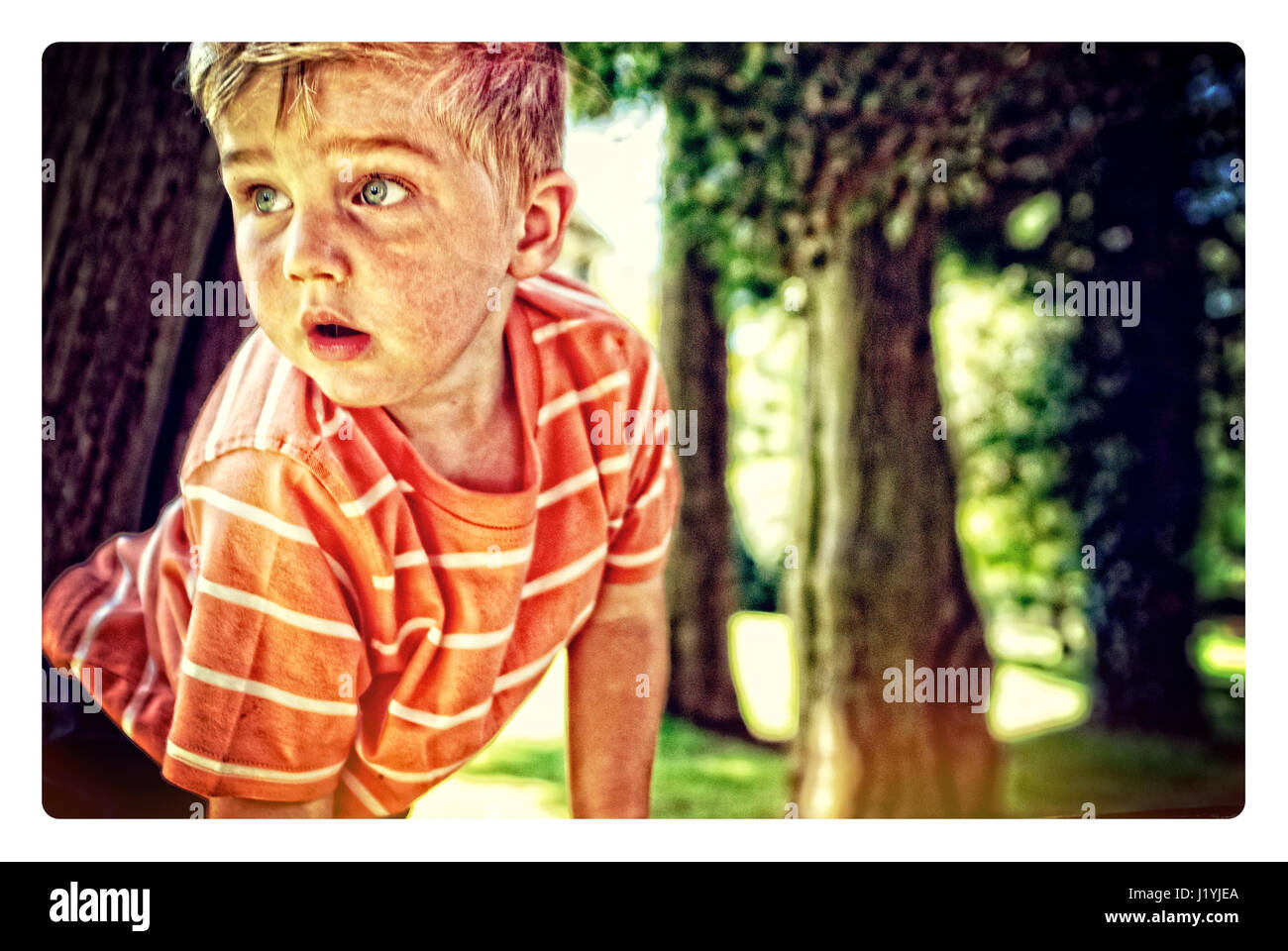 A young boy, exploring and climbing trees - Stock Image