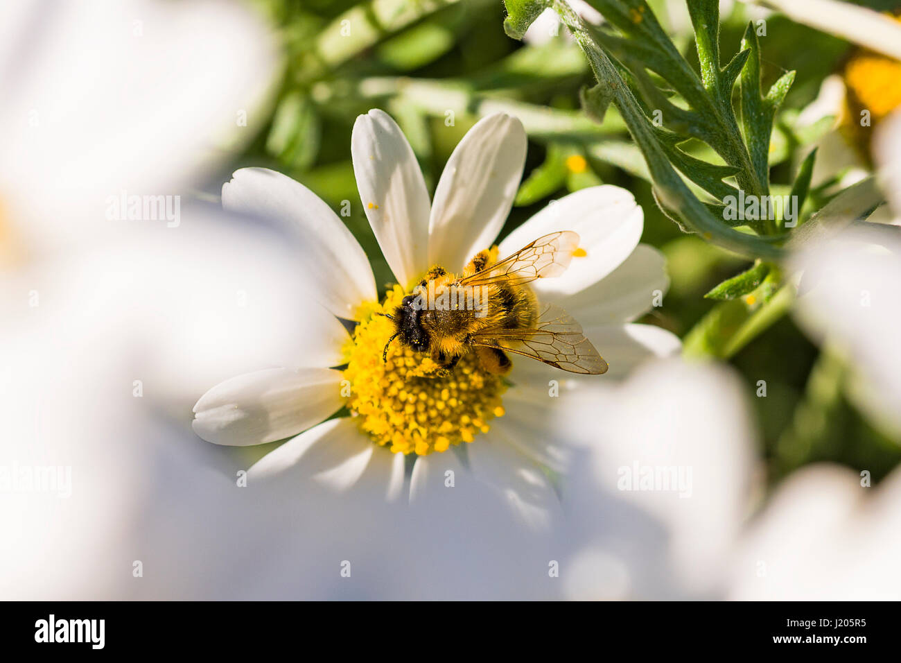 Early spring flowers for bees stock photos early spring flowers the honey bees are out in force collecting nectar around the early blooming flowers these mightylinksfo