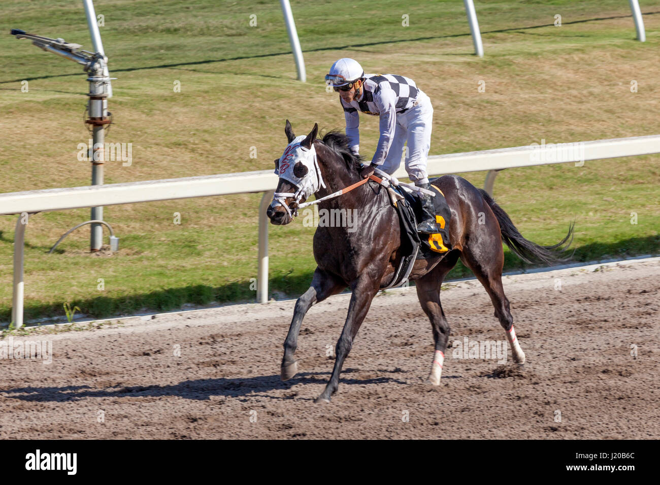 Hallandale Beach, Fl, USA - March 11, 2017: Horse racing at the Gulfstream Park race track in Hallandale Beach, - Stock Image