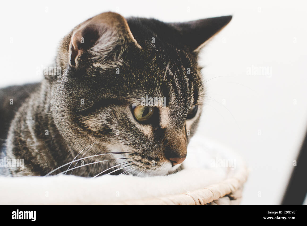 Tabby cat in a basket - Stock Image