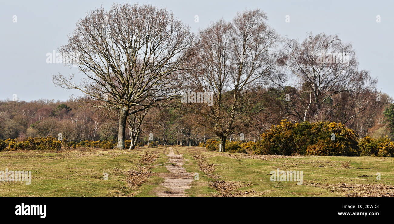 Looking across Black Knowl, Brockenhurst in the New Forest, Hampshire - Stock Image