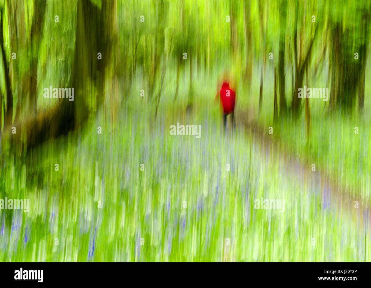 Conceptual Image of man or woman walking through woods - Stock Image