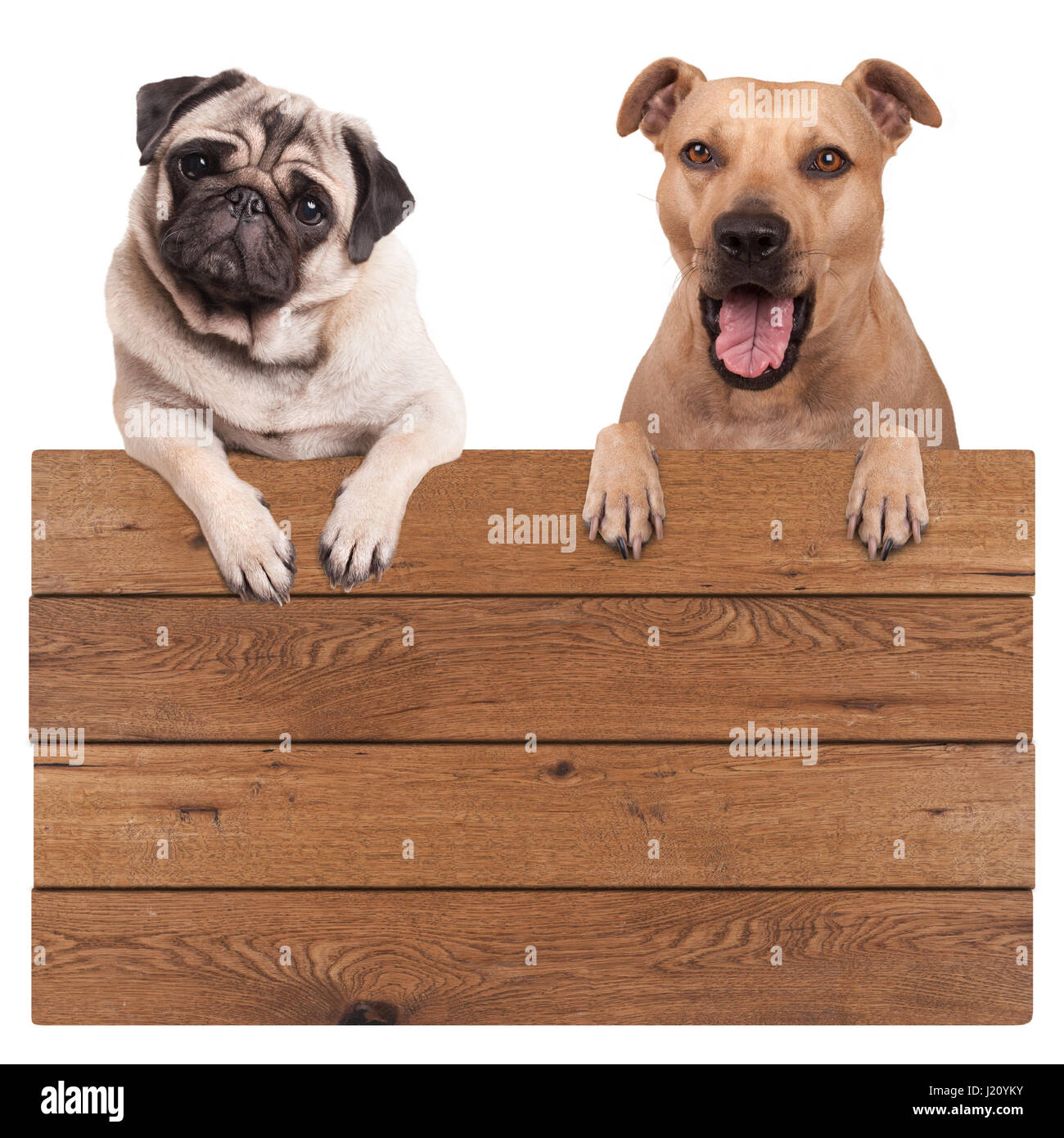 cute dogs, terrier and pug dog, hanging with paws on blank wooden promotional board sign, isolated on white background Stock Photo