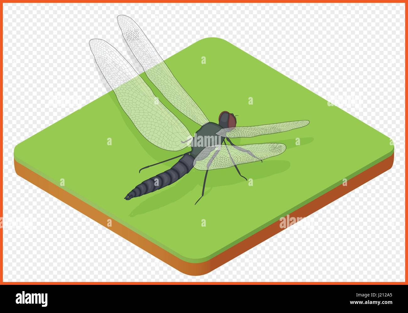 dragonfly vector eps - Stock Vector