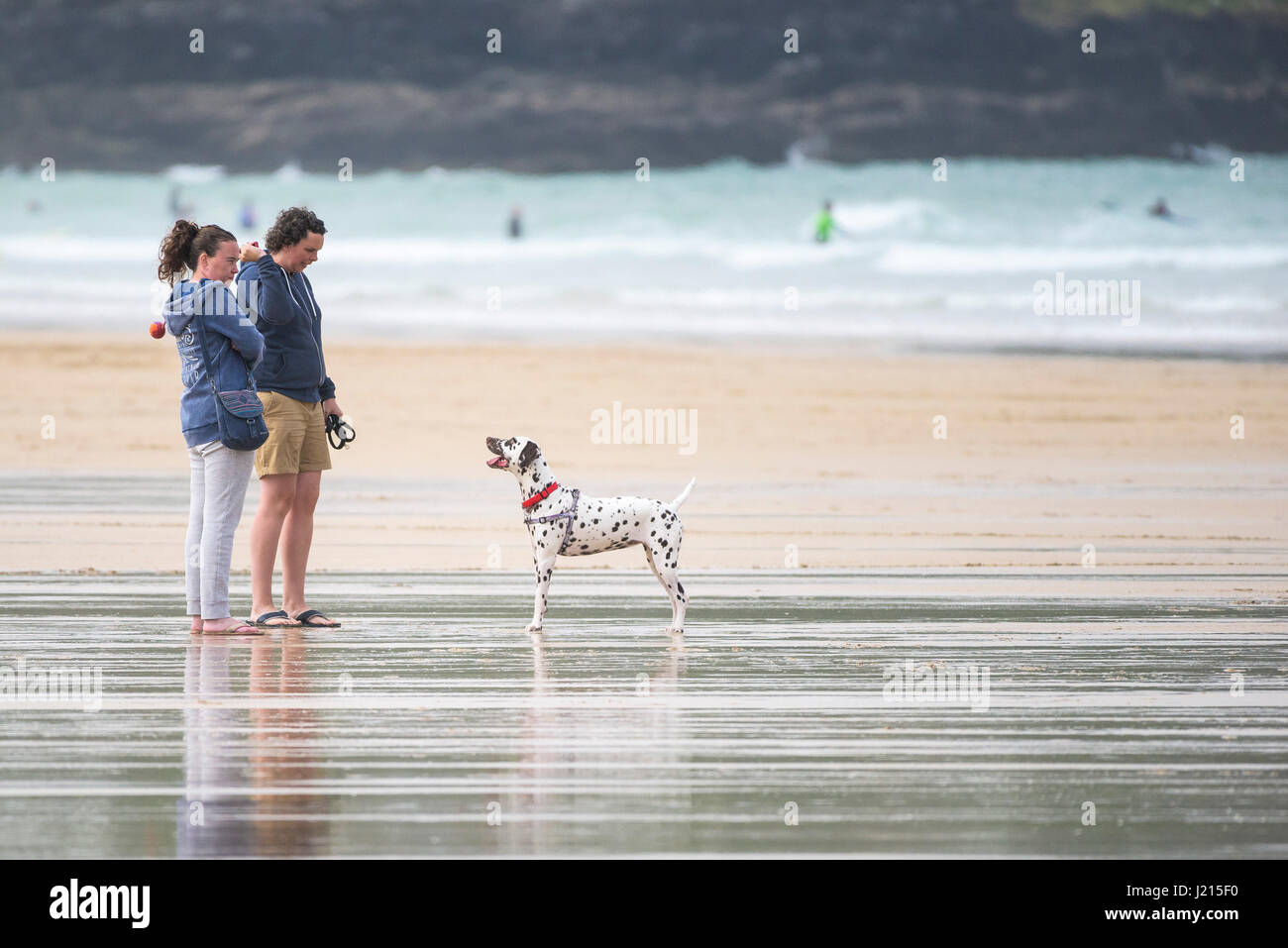People playing with a dog; Owners; Dalmation; Pet; Plaful; Playing; Leisure activity; Fistral Beach; Newquay; Cornwall; - Stock Image