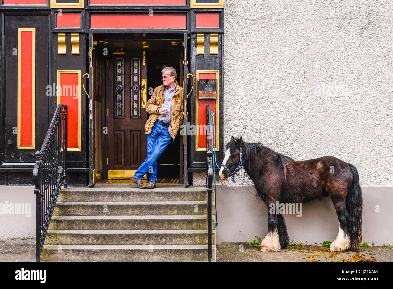 A horse is tied up at the entrance to a pub while his owner has a pint of beer at the Toome Horse Fair, Northern - Stock Image