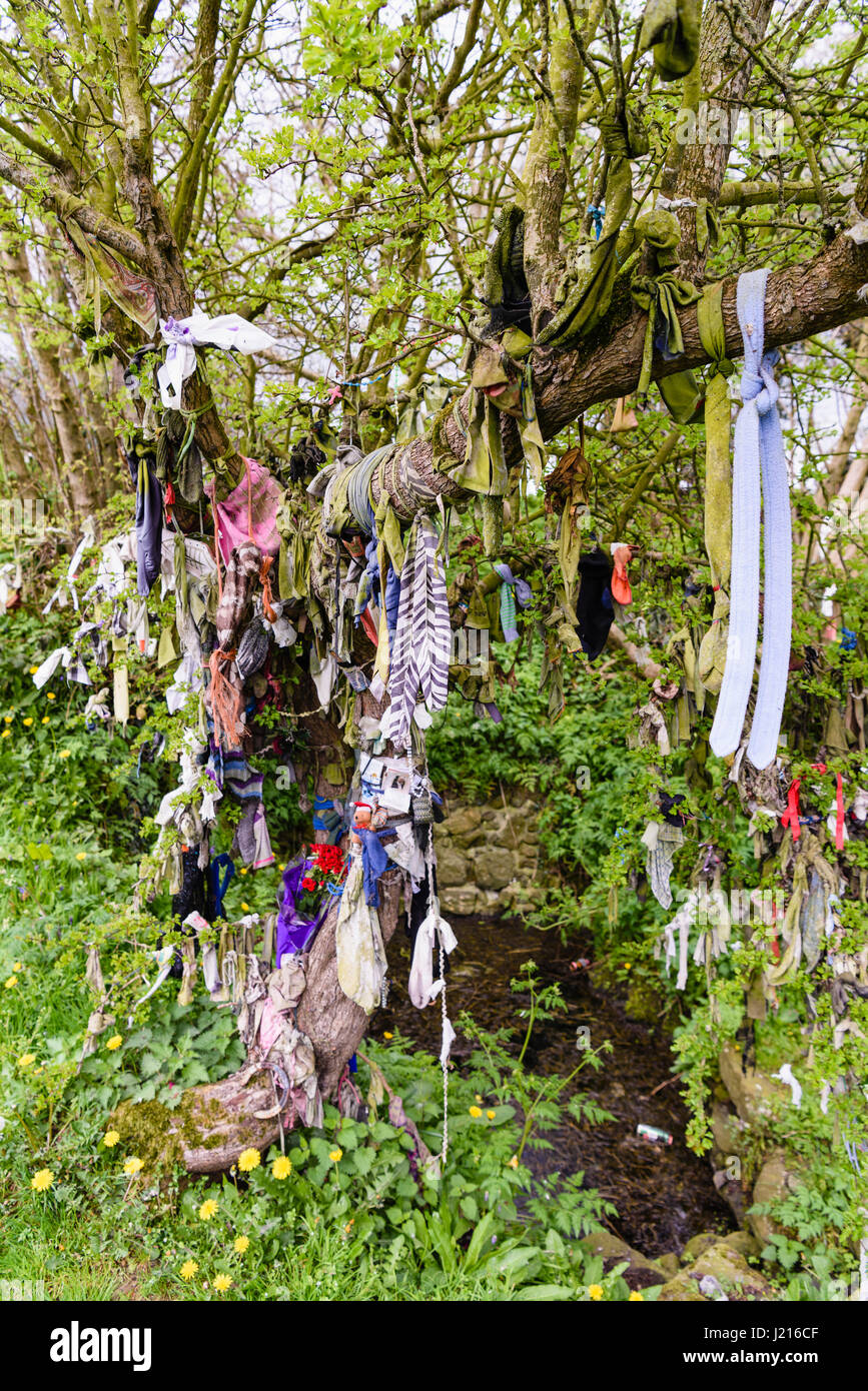 Cloth and other items tied to a tree for luck at an Irish holy well. - Stock Image