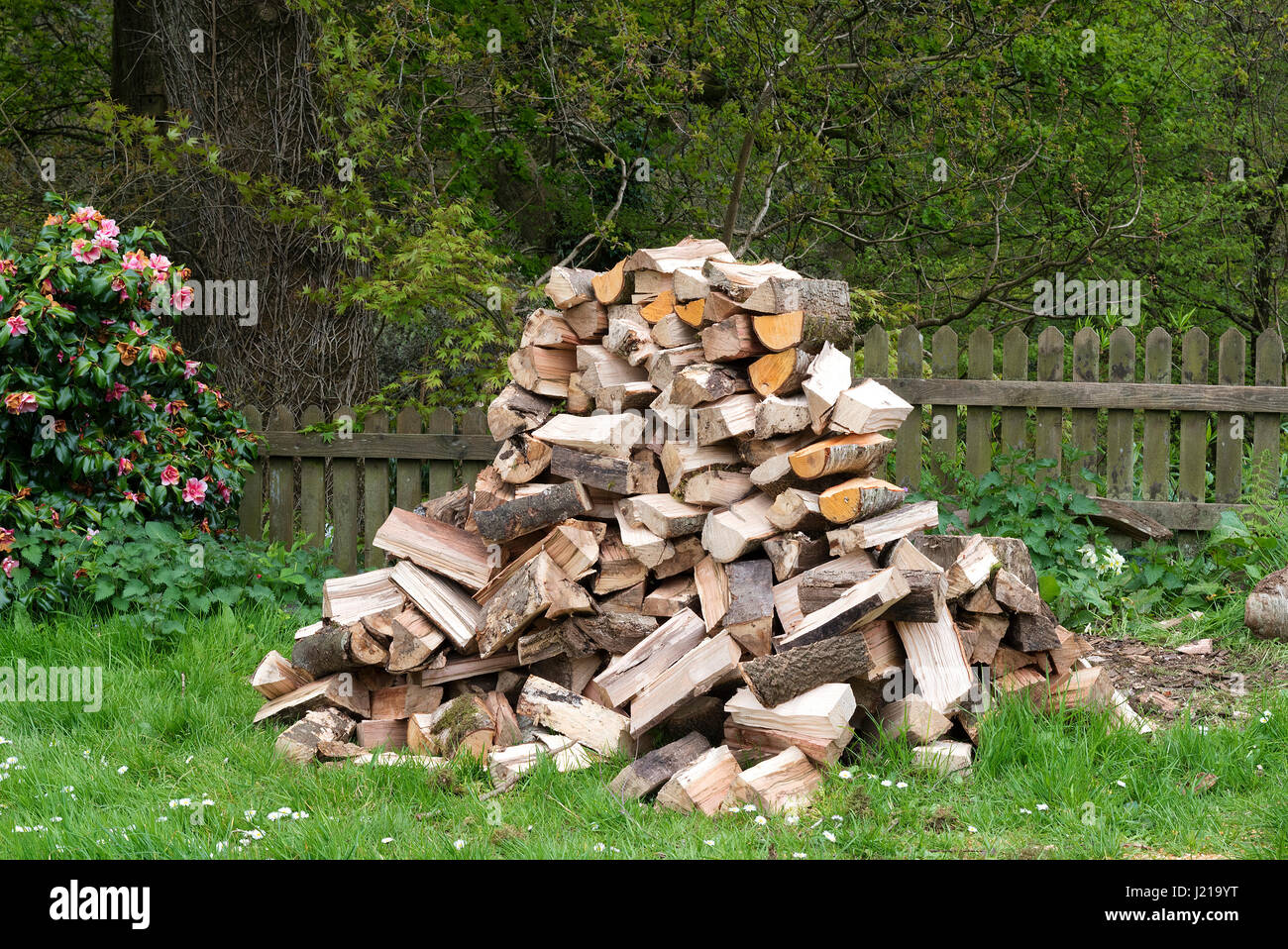a pile of chopped logs for firewood - Stock Image
