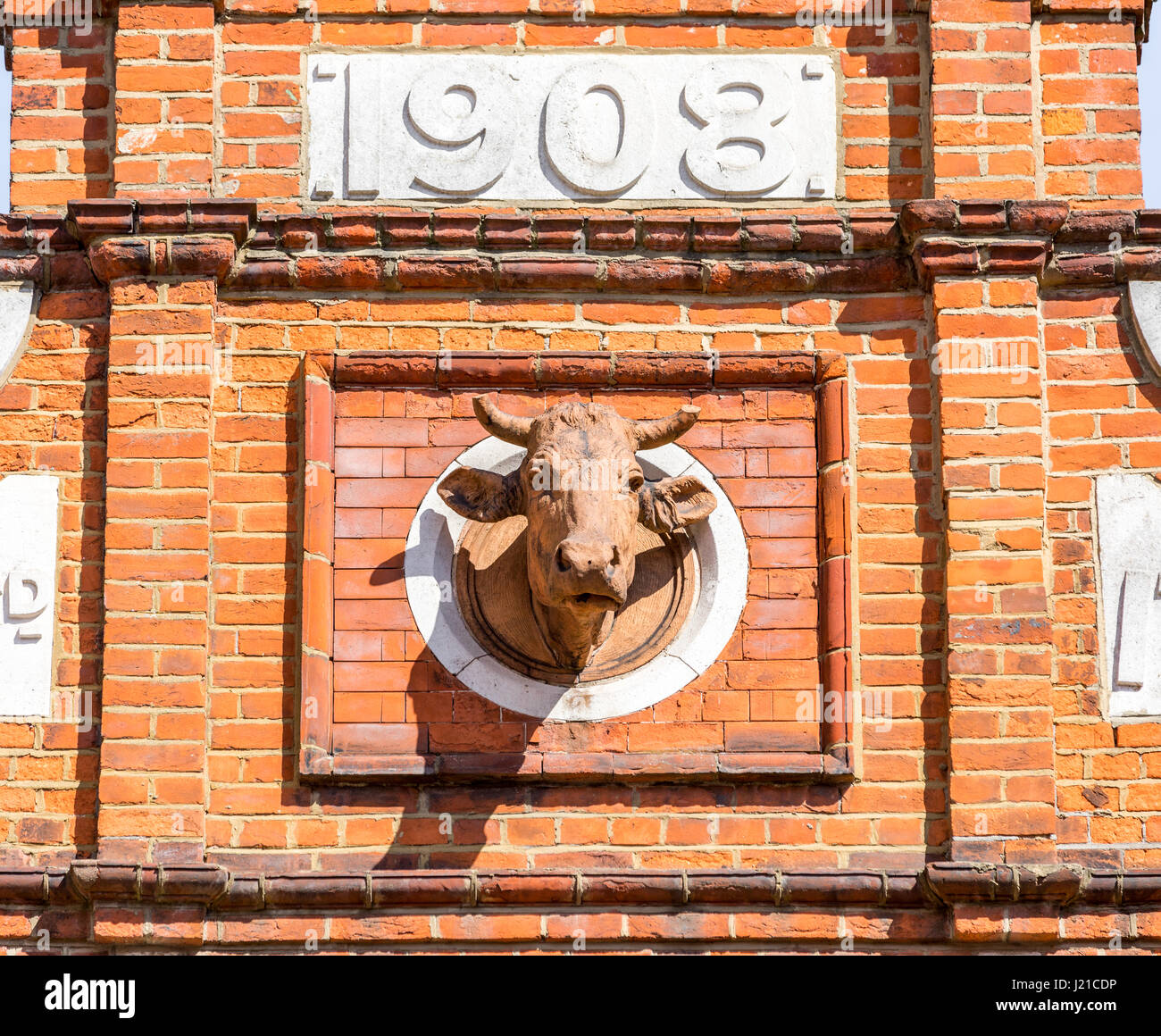 the top of an old building built in 1908 with an elaborate cow's head protruding from the facade in London England, - Stock Image