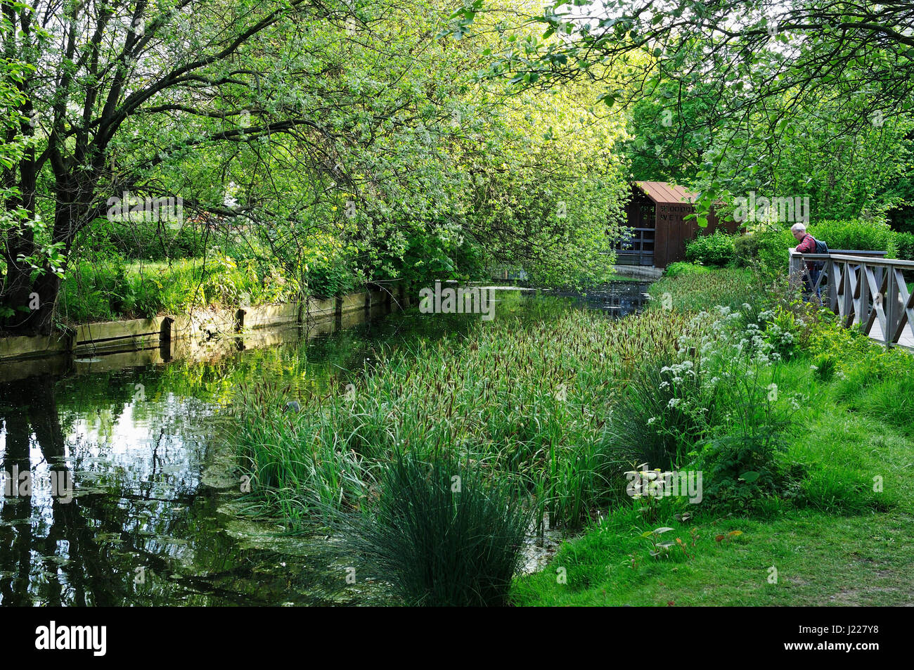 Woodberry Wetlands Nature Reserve, North London UK - Stock Image