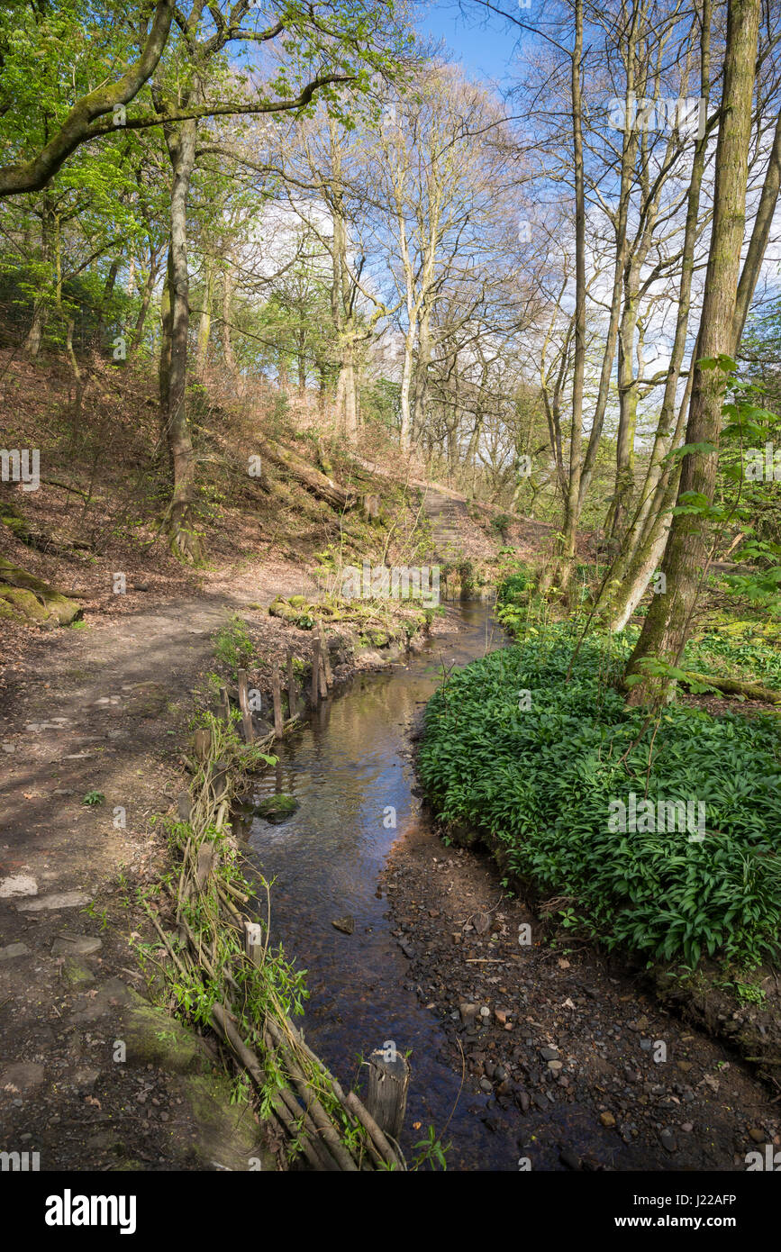 A spring day at Eastwood nature reserve, Stalybridge, Greater Manchester, England. - Stock Image