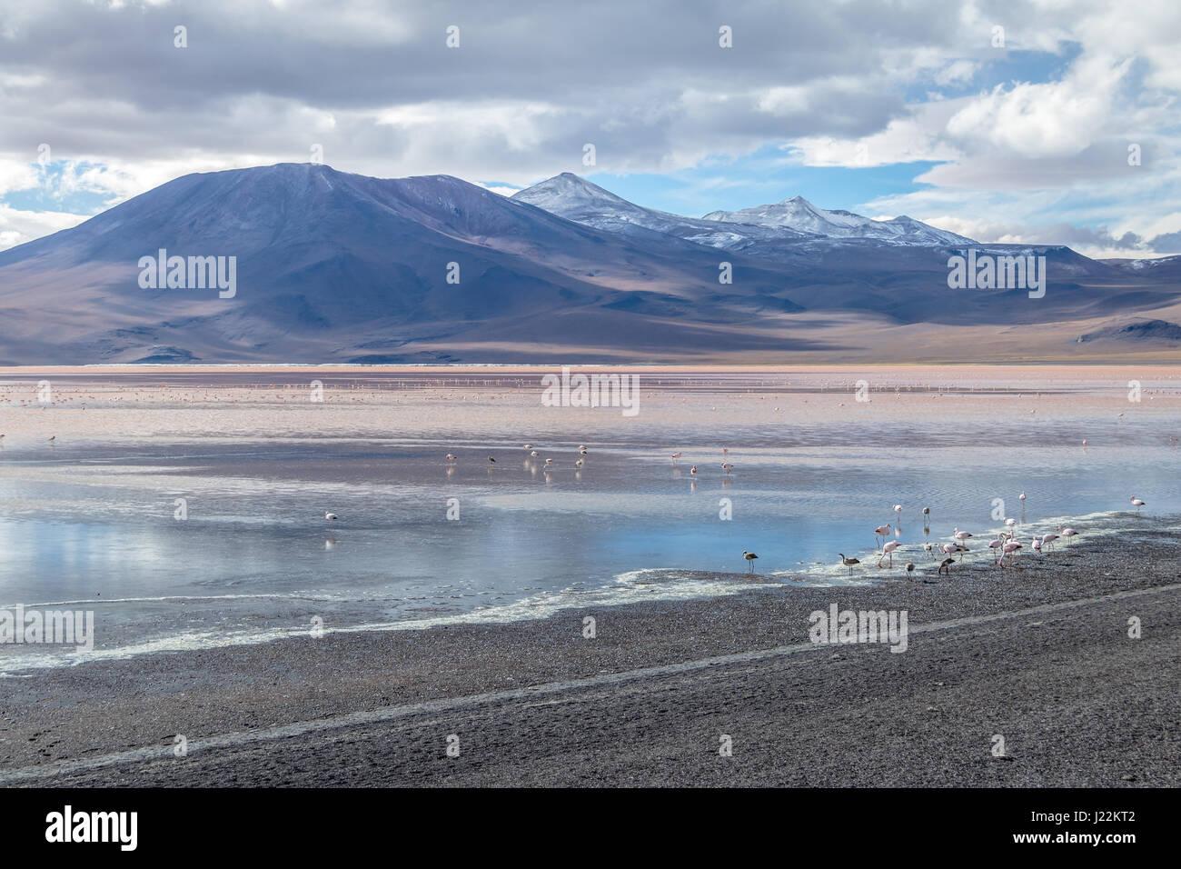 Laguna Colorada (Red Lagoon) in Bolivean altiplano - Potosi Department, Bolivia - Stock Image
